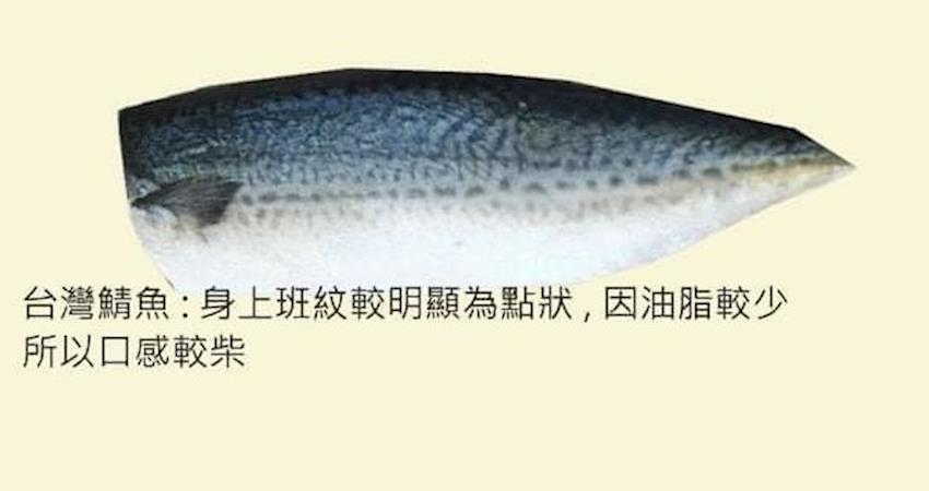 被魚販呼嚨!買挪威鯖魚變台灣鯖魚!社員:「光是油脂跟口感就差很多了!】。」